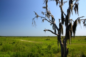 Midafternoon on the prairie