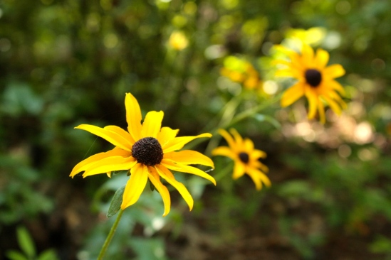 san felasco flowers