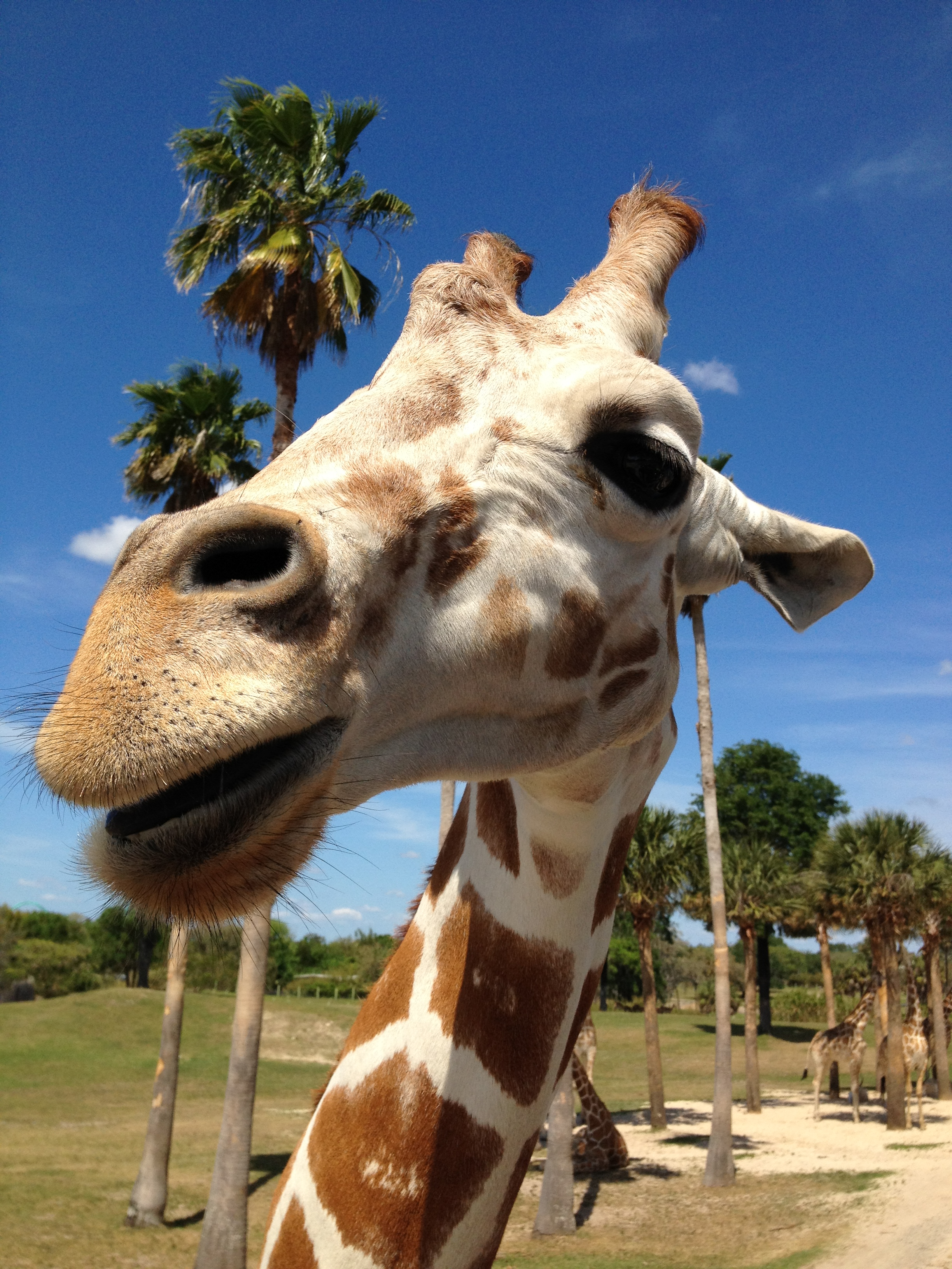 Photo friday busch gardens in tampa fla florida for Giraffe childcare fees