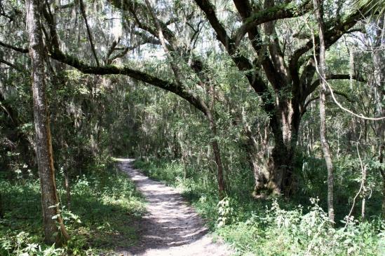 Bolen Bluff trail