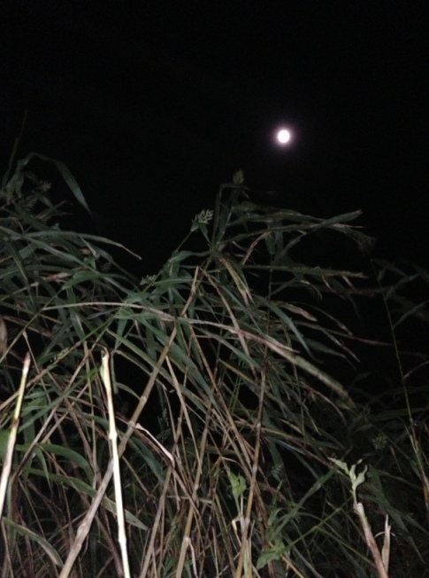 Corn and the moon