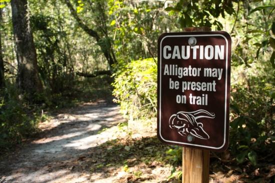 Alligators on the trail sign
