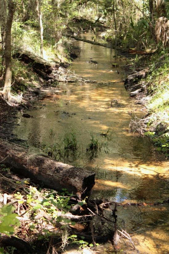 Bivens Creek