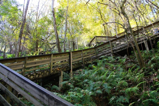 Devil's Millhopper Stairs
