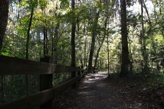 Devil's Millhopper Trail