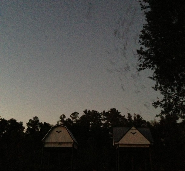 Bat houses UF Gainesville