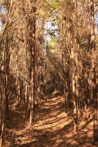 Big Oak Trail.