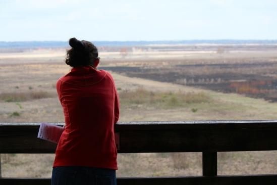 Scenic-overlook-paynes-prairie