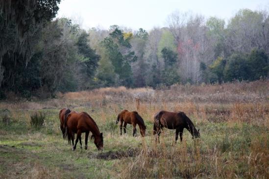 wild-horses-eating